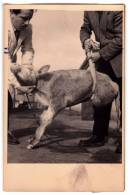 AGRICULTURE FARMS CATTLE BREEDING STOCK WITH DISABILITIES OLD POSTCARD - Farms