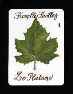 1 Carte De Jeu / Le Platane  -  Feuilles / Arbre  // IM 91/4 - Vieux Papiers