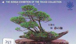 Télécarte Japon * Arbre Nain * BONSAI ( 280)  Dwarf Tree Japan Phonecard * Telefonkarte Baum - Fleurs