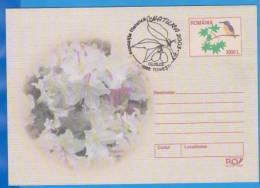 Flower, Bird, Kingfisher, Alcedo Athis Special Cancellation Romania Postal Stationery  2003 - Pflanzen Und Botanik