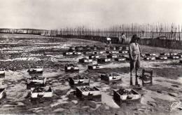 ARCACHON (33) PARC A HUITRES - LES COLLECTEURS - LA RECOLTE - PTE CARTE PHOTO DENTELEE  N/B VOYAGEE EN 1964 - ANIMEE - Arcachon