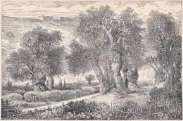 PALESTINE. Gethsémané. 1892 - Vieux Papiers