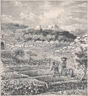 Jardins Au Sud De LA PALESTINE. 1892 - Vieux Papiers