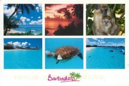 Turtle Monkey Etc, Barbados Postcard Used Posted To UK 2011 USA Stamp - Barbados