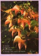CPM 10*15/F753/FEUILLES D ARBRES - Fleurs, Plantes & Arbres
