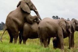 Elephants Stamp Card 0625 - Elefantes