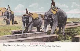ASIE----Elephants At Work--voir 2 Scans - Sri Lanka (Ceylon)