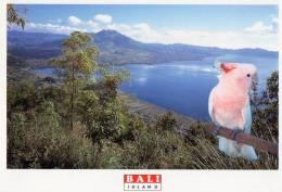 Mt Batur, Kintamani, Bali - Ulundanu UP 047 Unused - Indonesia
