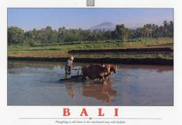 Ploughing With Buffalo, Bali - Impact BL749 Unused - Indonesia