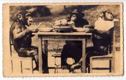ANIMALS MONKEYS AT THE TABLE EATING 1339 OLD POSTCARD - Singes