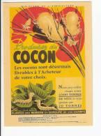 Cocon De Ver à Soie - Advertising