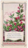 Chromo La Gaduase Les Plantes Médicinales Belladone Genre Des Solanées Atropa Belladona - Cromos