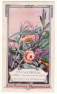 Chromo La Gaduase Les Plantes Médicinales Eucalyptus Genre Des Myrtacées Eucalyptus Resinefera - Cromos