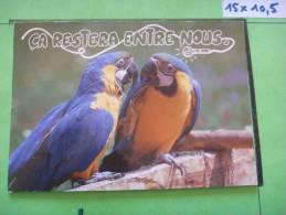 42 ) Oiseaux : Perroquets : Humour :on Restera........... - Oiseaux