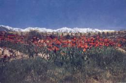 """AK Hindukusch Ca. 1960 (?)  Afghanistan """" Wild Tulips Against The Hindukush Range """" - Afghanistan"""