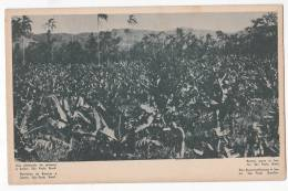 Brazil Sao Paulo SP Bananas Plantation  Postcard Original Ca 1900 Cpa Ak (W3_744) - São Paulo
