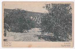 Brazil Sao Paulo Old Postcard Orange Plantation Original Ca 1920 Cpa Ak (W3_750) - São Paulo