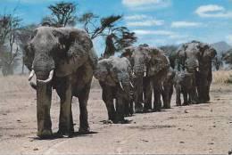 AFRICAN WILD LIFE -  ELEPHANT HERD - Elephants