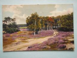 24917 PC: GERMANY: LOWER SAXONY: Landschaft Bei Grossenkneten. (Postmark 1913). - Germany