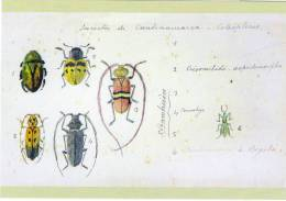 Lote PEP233, Colombia, Postal, Postcard, Colección Banrep, Santiago Cortes, Insectos, Coleopteros - Colombia