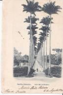 Brazil Rio De Janeiro Jardim Botanico Cartao Postal Original Postcard Cpa Ak (W_829) - Rio De Janeiro