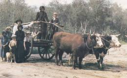 Joe Cole Family On Fort Pitt Trail, Red River Cart And Covered Wagon, Edam, Saskatchewan, Canada, 1980 - Saskatchewan