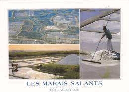 SAINTE MARIE DE RE 17, LES MARAIS SALANTS - Francia