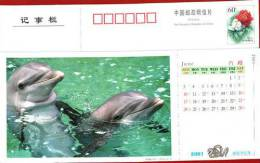 Dolfijn   Gp0073h - Delfini