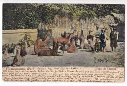 AMERICA PERU HUANCABAMBA GROUP OF LIAMAS OLD POSTCARD 1905. - Peru