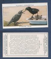 CHROMO PLAYER´S CIGARETTES - BIRDS AND THEIR YOUNG - STARLING FEMALE - ETOURNEAU - Player's