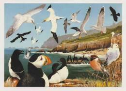 AI05 Animals - Seabirds Of Cornwall - Birds