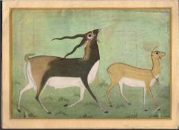 Vintage Black Buck And Doe Vakils Signed Card New Delhi, India - Postcards