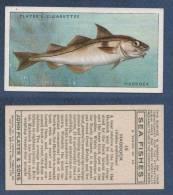 CHROMO PLAYER´S CIGARETTES - SEA FISHES - HADDOCK -  Aiglefin - Player's