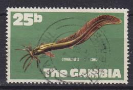Gambia 1971 Mi. 254     25 B Fisch Fish Aalwels - Gambia (1965-...)