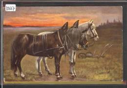 CHEVAUX  - TB - Pferde