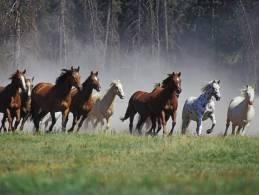 Horses Postcard (15x10 Cm. Aprox.) - Pferde