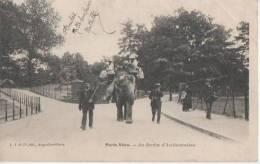PARIS VECU ( Au Jardin D' Acclimatation Promenade A.dos D' Elephant) - France