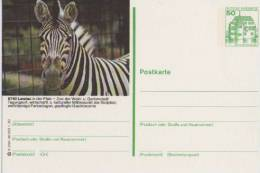Entier Postal Allemagne, 1980 - Zebra /  Zèbre - Stationery Postcard - Wild