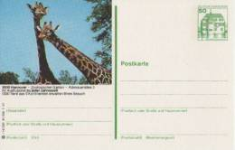 Entier Postal Allemagne, 1981 - Giraffe/  Girafe  - Stationery Postcard - Giraffes