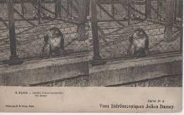 PARIS ( Jardin D' Aclimatation - Un Singe ) - Cartes Stéréoscopiques