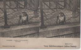 PARIS ( Jardin D' Aclimatation - Un Singe ) - Stereoscope Cards