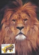 D10099 CARTE MAXIMUM CARD FD 2011 NETHERLANDS - LION CP ORIGINAL - Big Cats (cats Of Prey)