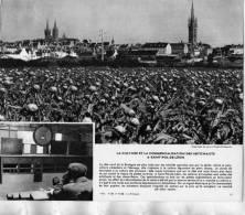 SAINT POL DE LEON LA CULTURE DES ARTICHAUDS LE MARCHE AU CADRAN    / FINISTERE 29 PHOTO FORMAT 24X20CM EDITION 1962 - Lieux