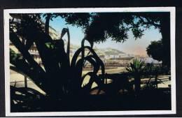 RB 906 - Early Real Photo Postcard - Alger Algiers Algeria - Notre-Dame D'Afrique Prise Du Bd Guillmin - France Interest - Algiers
