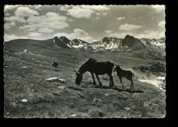 P 2012 11 11 Andorre . Chevaux En Liberté Dans La Montagne.Editeur Réal Ax Les Thermes, Sans N° - Andorra