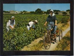 Femme En Quichenotte Sur Tricycle Dans Vignes édit - Francia