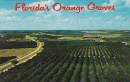 Florida Brunswick Orange Grove Are Seen For Miles In Every Lircetion From The Highest Point In The State 1968