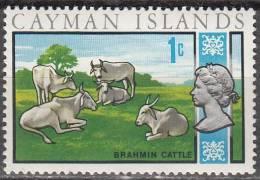 Cayman Islands 1970 Michel 262 Neuf ** Cote (2004) 0.10 Euro Zébus - Iles Caïmans