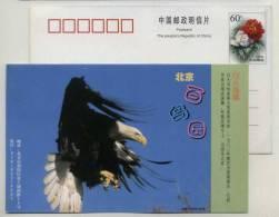 USA National Bird,Haliaeetus Leucocephalus,Bald Eagle,CN 99 Beijing Bird Paradise Advertising Postal Stationery Card - Aquile & Rapaci Diurni