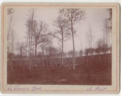 PHOTO 89 MAILLY LE CHATEAU Lieu Dit Les Champs Gras La Forêt Période Fin XIX° Format 12.5 X 9.5 Cms Rare - Places